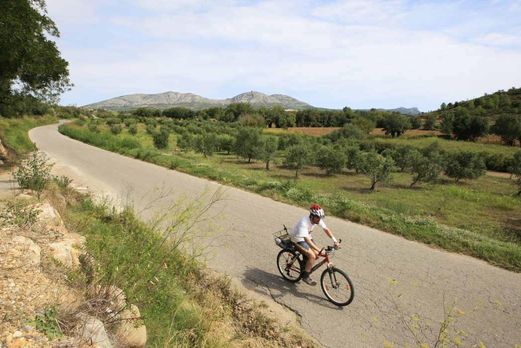 Cyclist in front of vineyards