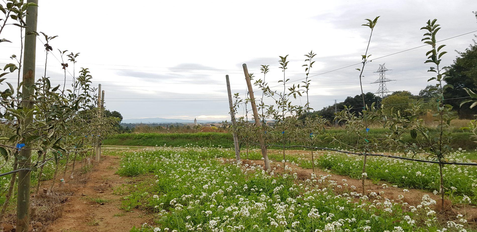 fruiters a l'entorn de la ruta Fornells - Campllong