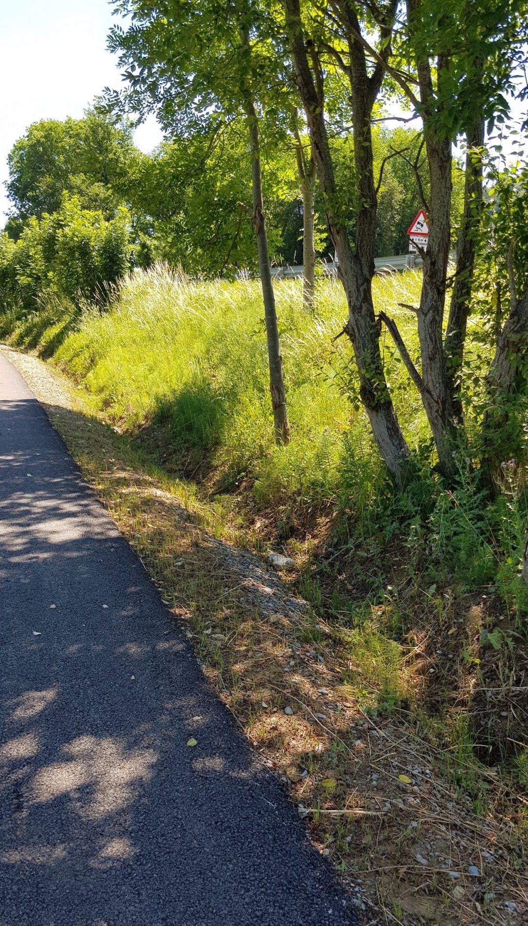 Ruta a la Colònia Llaudet. Vista general i voral verd