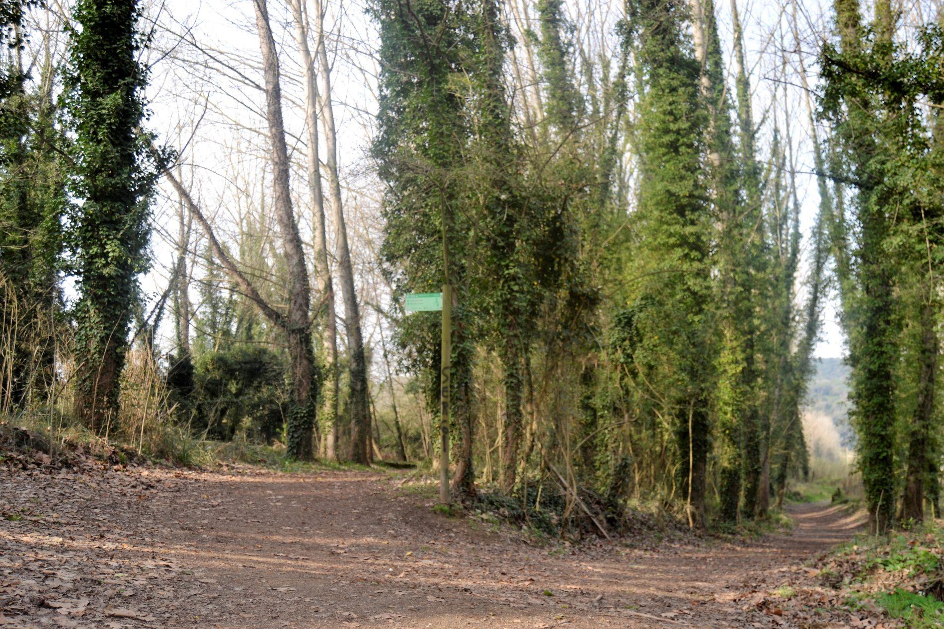 camí al pas dels Carros - Bescanó