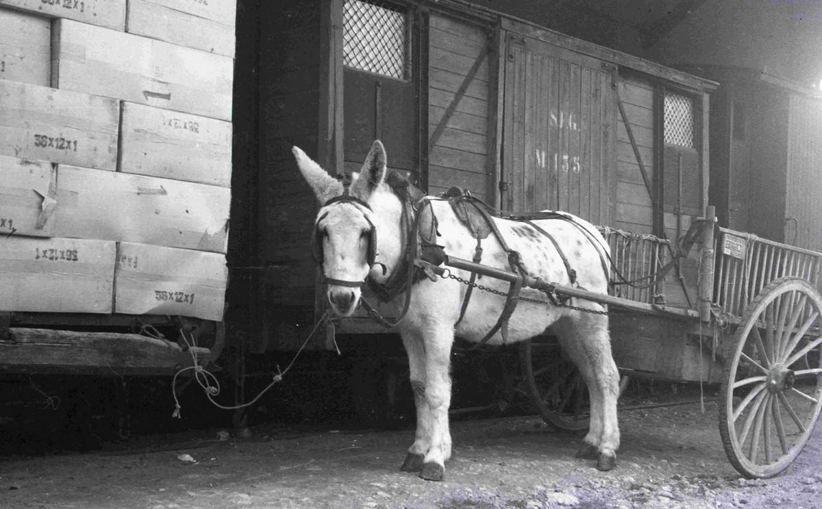 Curro amb una carreta lligat a un vagó de plataforma carregat de paquets